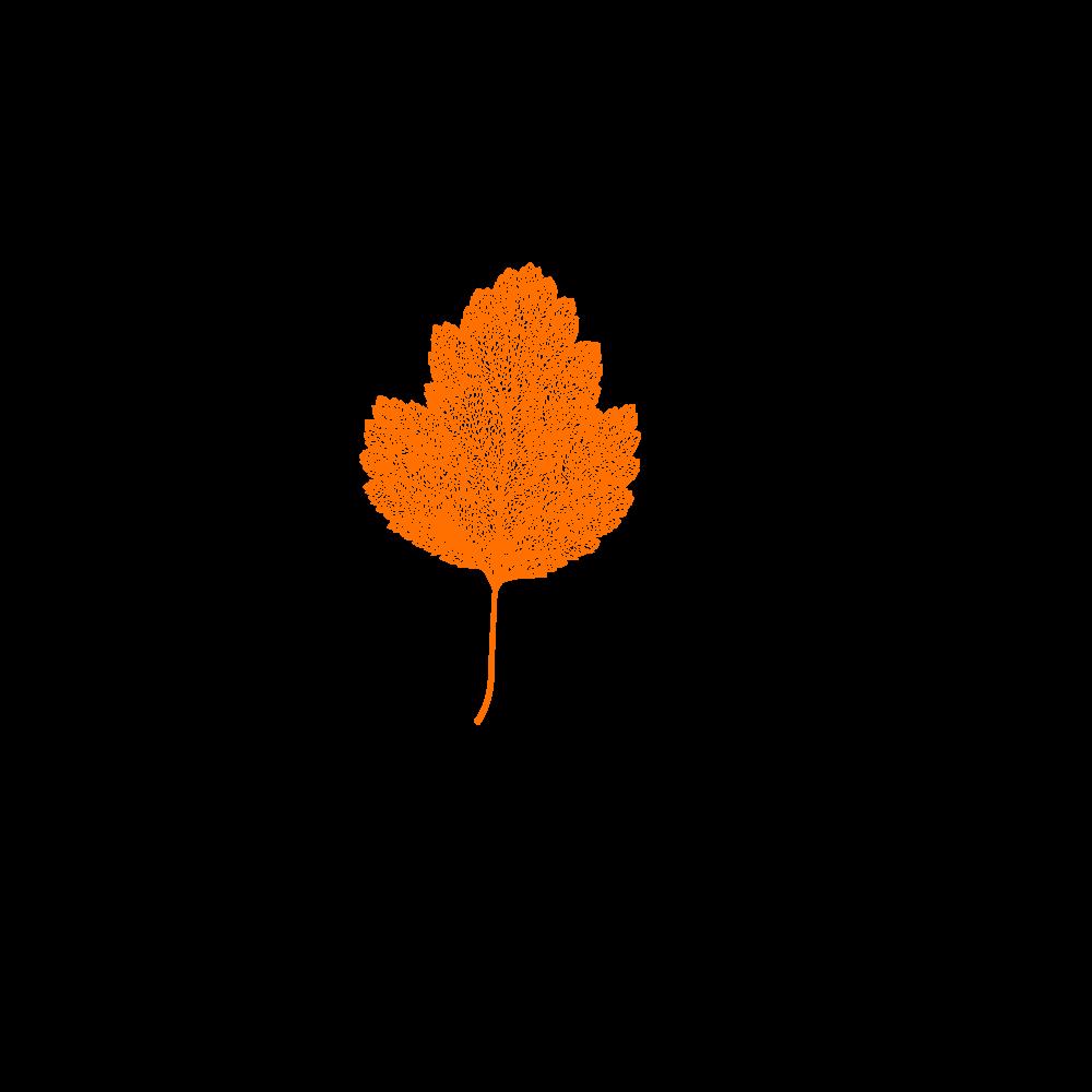 inter spinas films logo